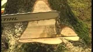 Schnitte und Techniken beim Baum Fällen   -   STIHL Video .....................Oeni