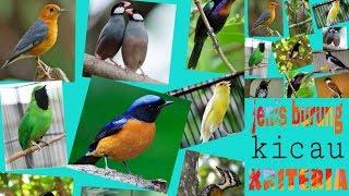 Macam-macam jenis burung dan kriterianya yang sering kita temui untuk dipelihara