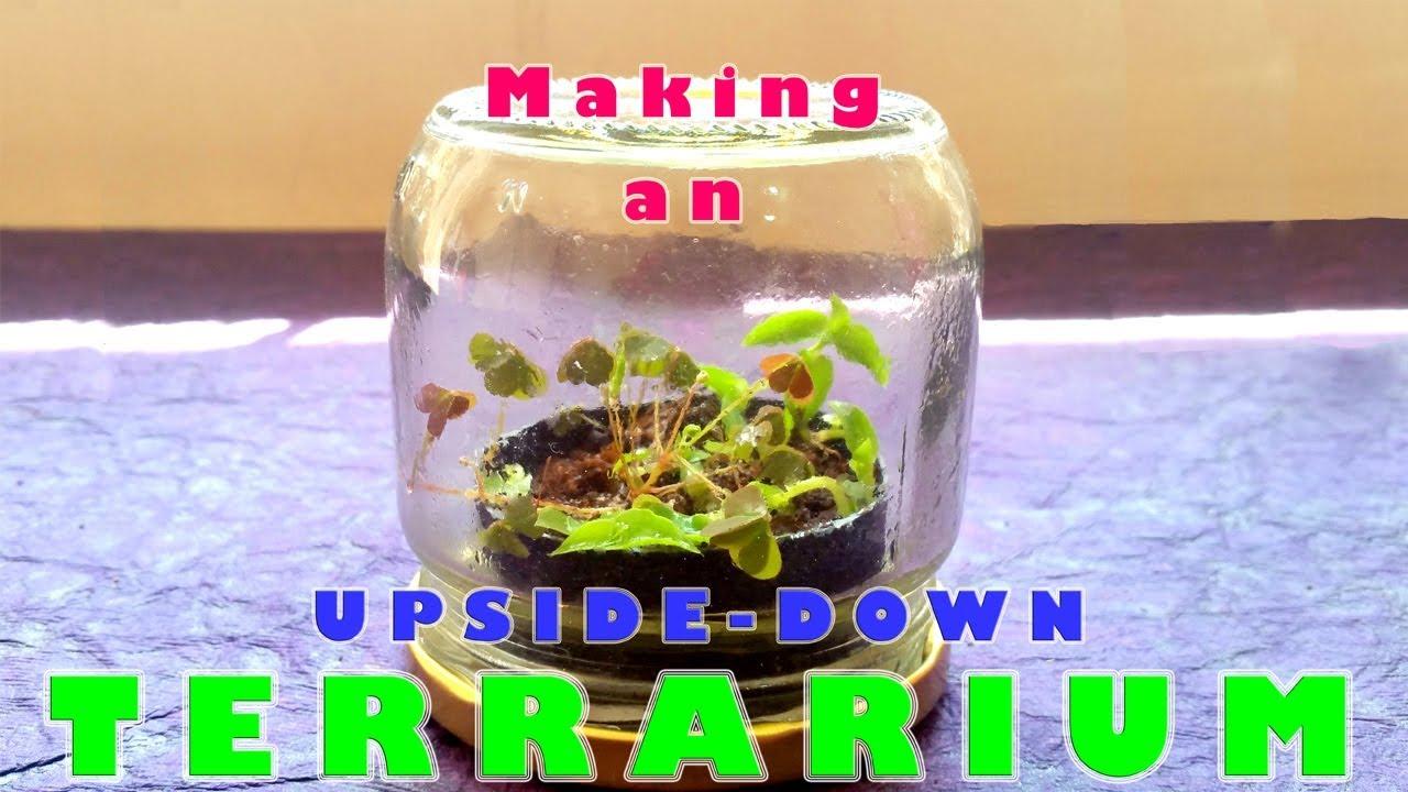 Diy Making An Upside Down Terrarium Youtube