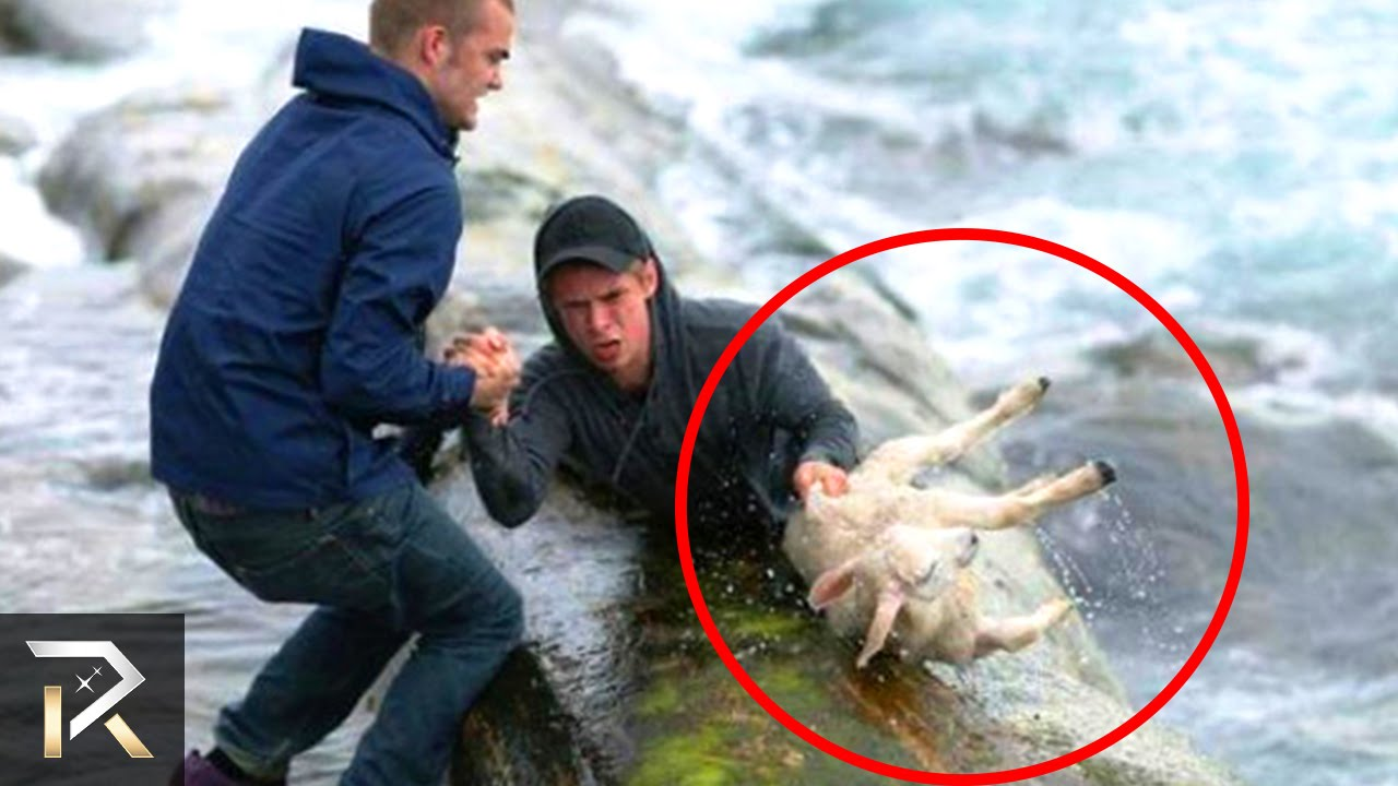 Dog Saves Person Video