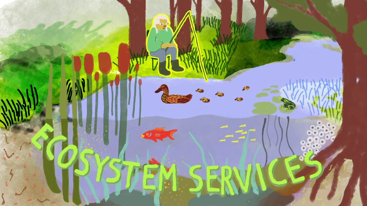 WATCH: Our animated introduction to Natural Capital Accounting