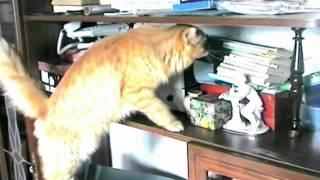 красивый клип про кошек.mpg