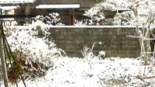 ピピとタロウと雪景色【ウロコインコ】