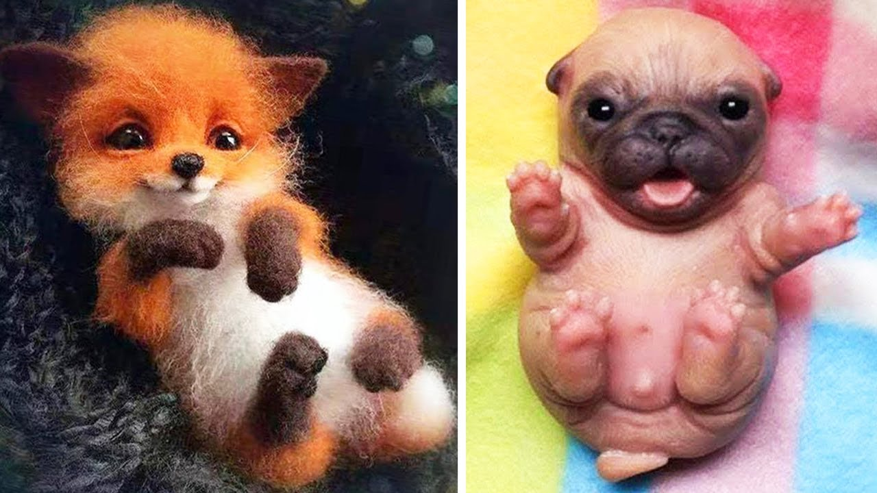 AWW Animals SOO Cute! Cute baby animals Videos Compilation cute moment of the animals #15