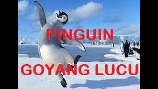 Download Video JOGED PINGUIN ASLI | PINGUIN BERGOYANG | Senam penguin video asli MP3 3GP MP4