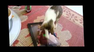 смешные животные смотреть онлайн бесплатно