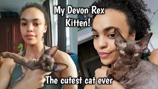 Introducing My New Kitten   Our Gorgeous Devon Rex