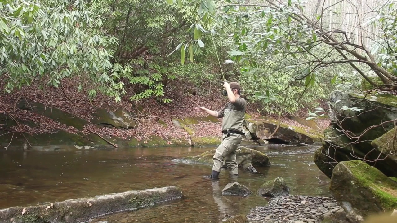 Fly fishing for brook trout great smoky mountain for Smoky mountain trout fishing