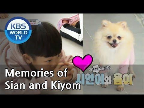 Memories of Sian and Kiyom [The Return of Superman | 슈퍼맨이 돌아왔다 / Editors' Choice]