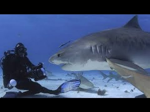 Shark Documentary  - Animal Planet Wildlife Animals - Nat Geo WILD