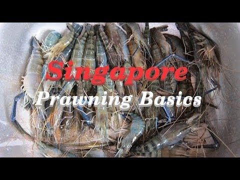 Singapore Prawn Fishing - Basics