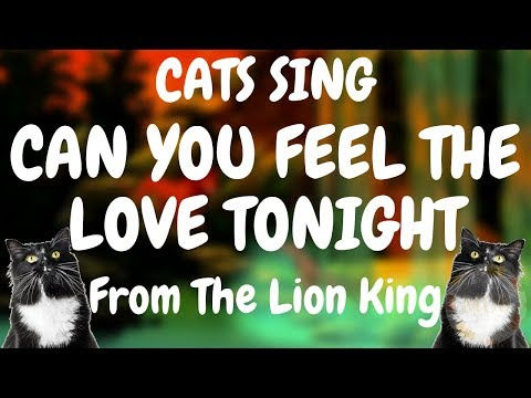 Cats Sing Can You Feel The Love Tonight from The Lion King | Cats Singing Song