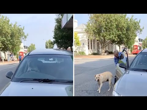 Trevor D in the Morning Show - VIDEO OF THE DAY: Dog Beeping a Car's Horn Until His Owner Shows Up