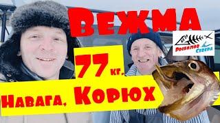 Рыбалка на Белом море Крупный Корюх и крупная Навага Унская губа Река Вежма