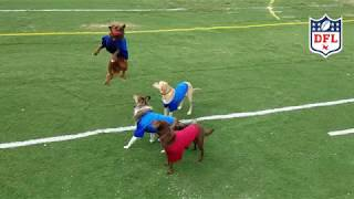 Game 1 of the DFL - Dog Football League