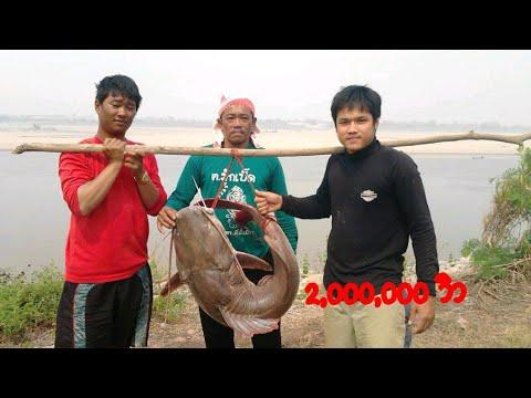 ปลากดคัง แห่งลุ่มแม่น้ำโขง
