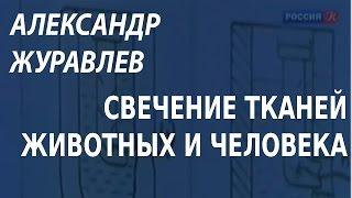 ACADEMIA. Александр Журавлев. Свечение тканей животных и человека. Канал Культура