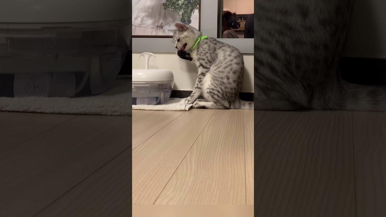 이갈이 중인 고양이 이빨이 흔들려요 !
