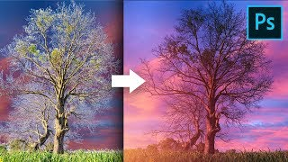 Remove Fringes Around Trees During Sky Swap! - Photoshop Tutorial