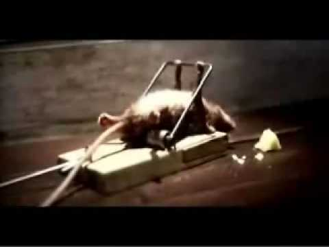 Funny Cheddar Cheese Comercial - Mouse and a Mousetrap