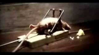 Funny Cheddar Cheese Comercial - Mouse and a Mousetrap thumbnail