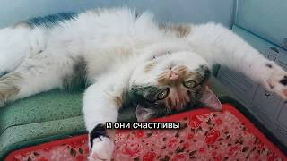 Теперь их четверо! Две кошки и два кота