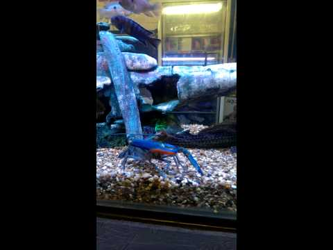 Large Tropical fish tank buy online