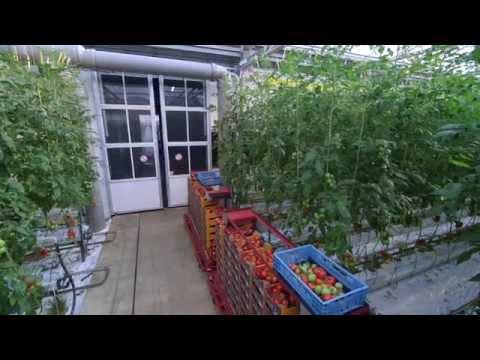 Schenkeveld Tomaten
