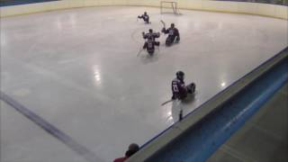HC Sparta Praha sledge hokej vs SHK Lapp Zlín