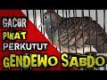 Perkutut Lokal Gacor Suara Besar Gendowo Sabdo Manggung Suara Burung Perkutut Gacor  Mp3 - Mp4 Download