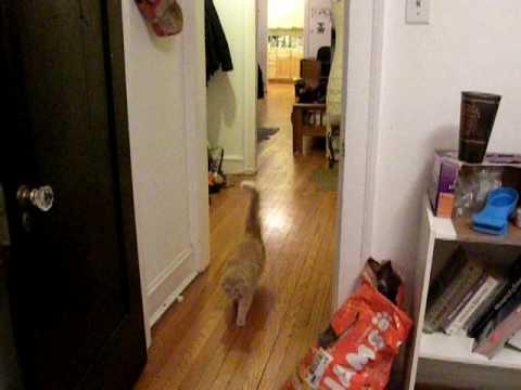 Kitty Kitty Kitty Food Time!
