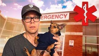 DOG EMERGENCY!!! Video