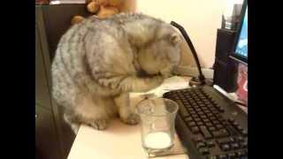 Кот и молоко..