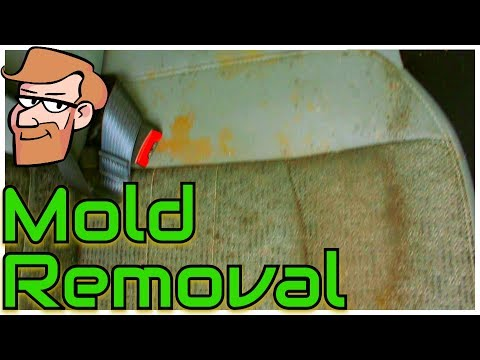 How to Remove Mold & Mildew from Car Seats • Cars Simplified