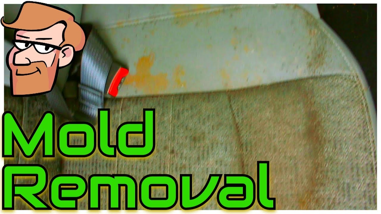 How To Remove Mold From Car Seats