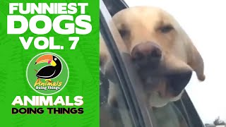 🐶  Funny Dogs Vol. 7  |  Animals Doing Things