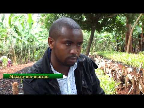 Mataro ma murimi: macadamia seedlings business