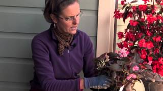 How to Pinch Out Begonias : More Gardening Advice