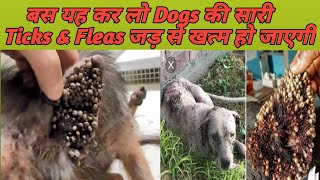 How To Remove Dog Ticks & Fleas At Home  ! Dog Ultimate Care !
