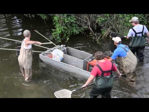 Electrofishing In Indian Creek