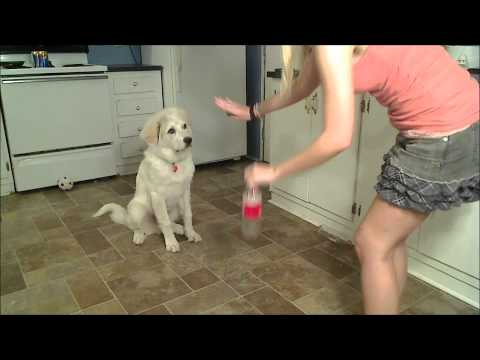 PUPPY SHOWING OFF TRICKS! streaming vf