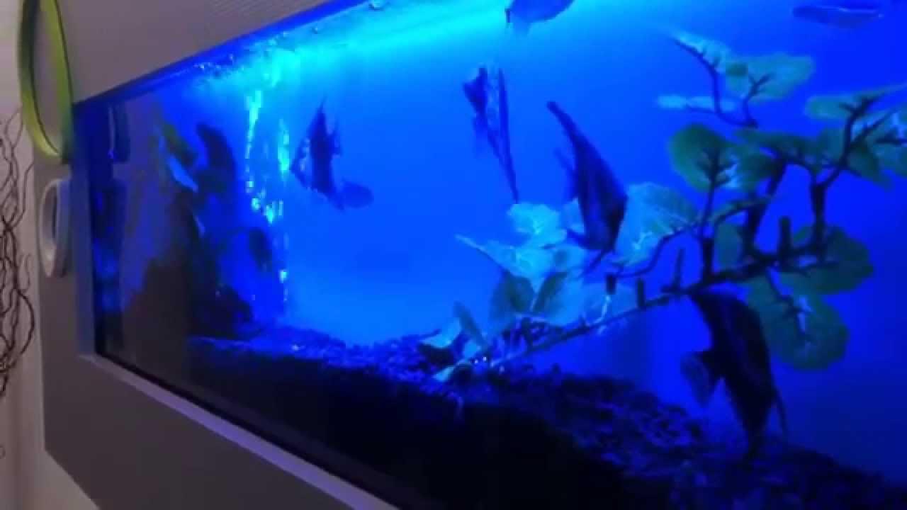 Wall Aquariums Fish Aquariums Mounted On A Wall Youtube