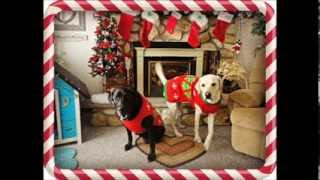 Christmas 2013 - My Dogs opening their Christmas Presents!!!! Thumbnail