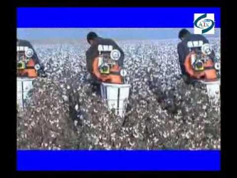 Popular use hand push gasoline engine cotton picking machine