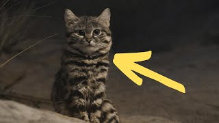 The World's Deadliest Cat Also Happens To Be One Of Its Cutest