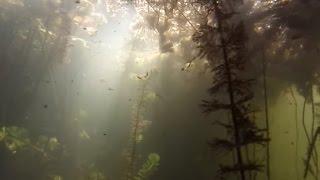 SPEARFISHING! Подводная охота на реке Иловля