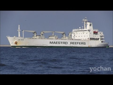 Reefer Ship: ICE ROSE (Maestro, IMO: 8311106)