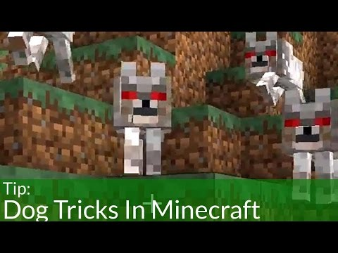 dog-tricks-in-minecraft