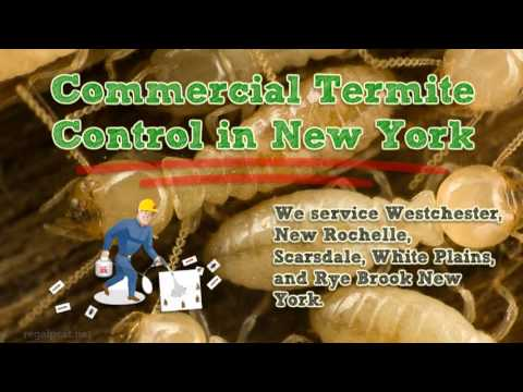 Commercial Termite Control in Westchester New York