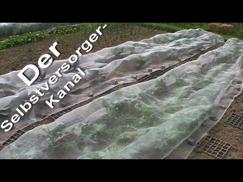 Erfolgreicher Pflanzenschutz im Biogarten